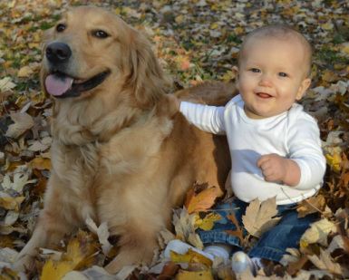 Golden Retriever with baby